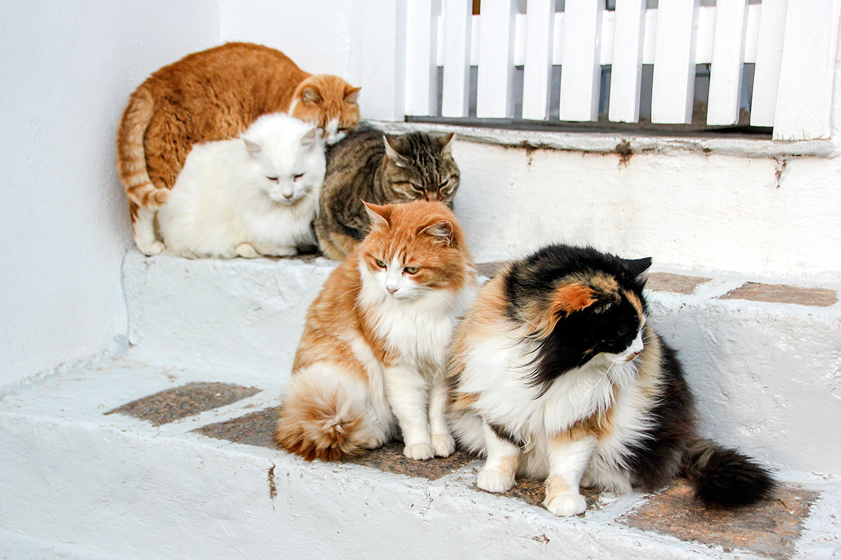 The Cats of Hydra