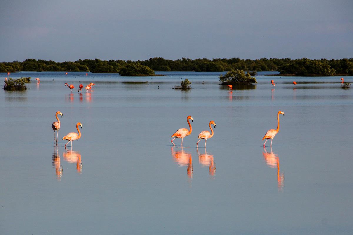 Ciénaga de Zapata National Park
